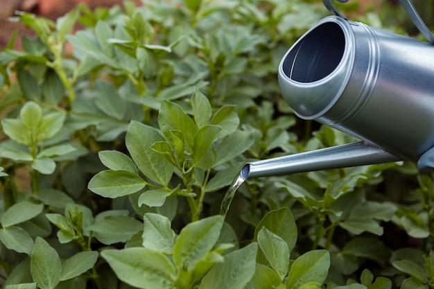 Крупный план полива растений садовником
