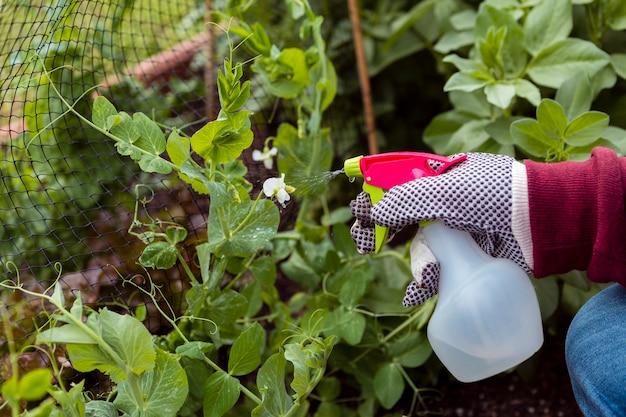 Крупным планом человек с садовые перчатки опрыскивание растений