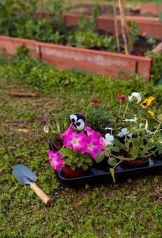 地面に鉢に高角の花