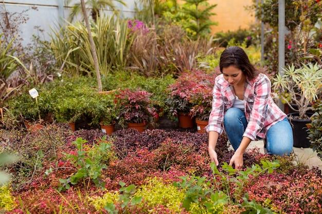 温室で植物を配置する女性