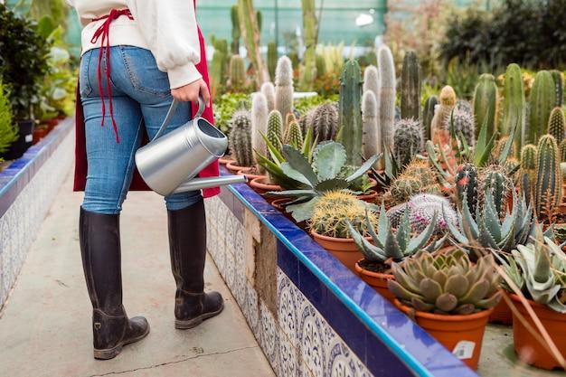 温室でサボテンに水をまく女性