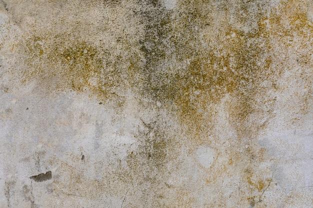 コンクリートの壁に苔と汚れ