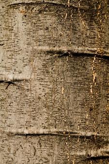 Рельефная текстура коры дуба крупным планом