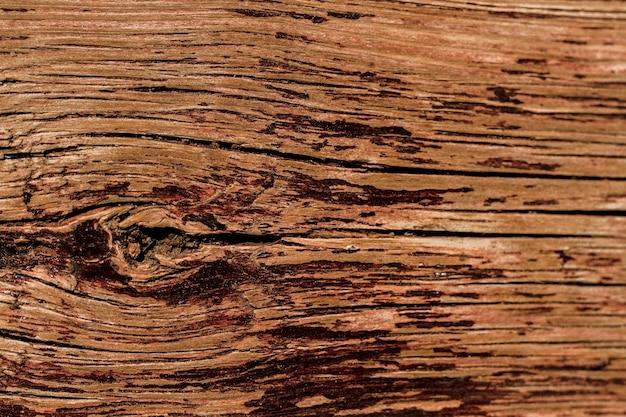 オークの樹皮のエンボス加工のテクスチャ