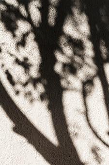 壁に木の影