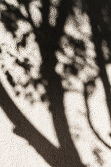 Тень дерева на стене