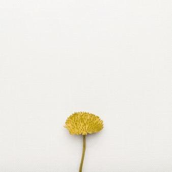 コピースペースでかわいいお祝い花