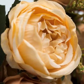 Букет из цветущих роз крупным планом
