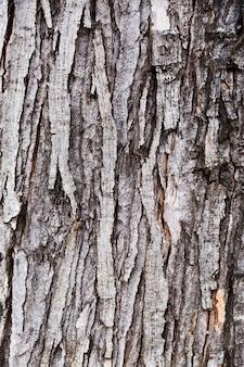 熟成した木の樹皮