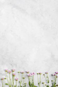 Плоская планировка красивых весенних ромашек