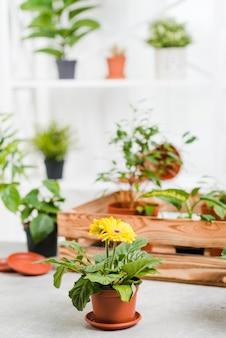高角温室花コレクション