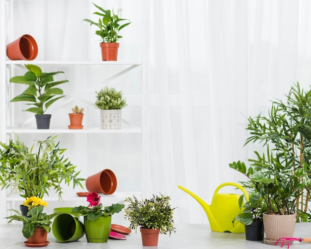 Вид спереди коллекции цветов теплицы
