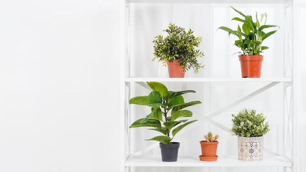 植木鉢とフロントビュー温室