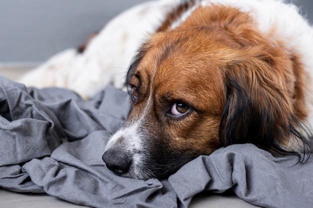 床に座ってハイアングル悲しい犬