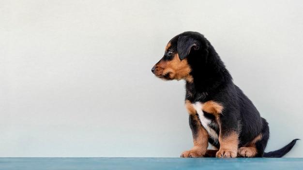 白い背景の上のサイドビューかわいい犬