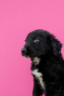 Вид сбоку черный щенок на розовом фоне