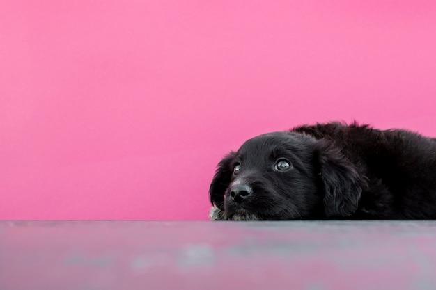 床に座ってハイアングルかわいい犬