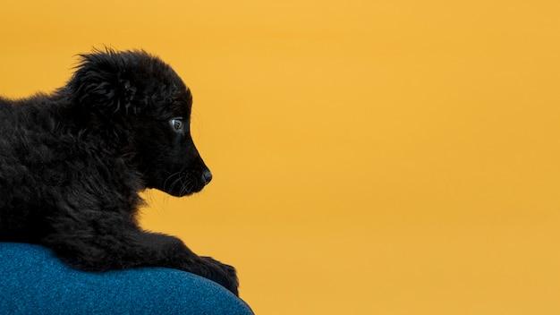 Вид сбоку пушистая черная собака с копией пространства