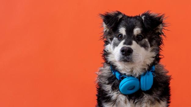 首にヘッドフォンでコピースペース犬