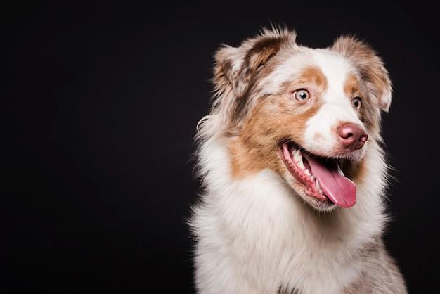 Вид спереди милая собака