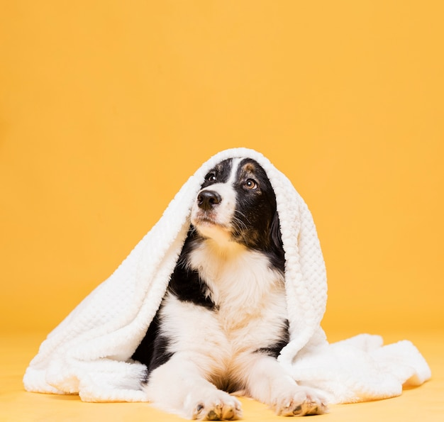 タオルでかわいい犬