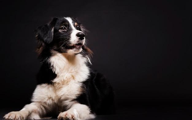 コピースペースで座っているかわいい犬