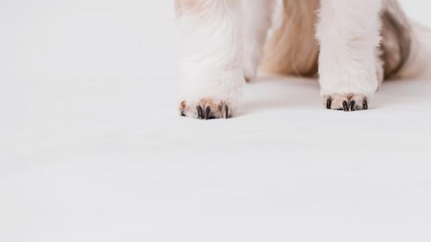 Крупный план передних ног собаки