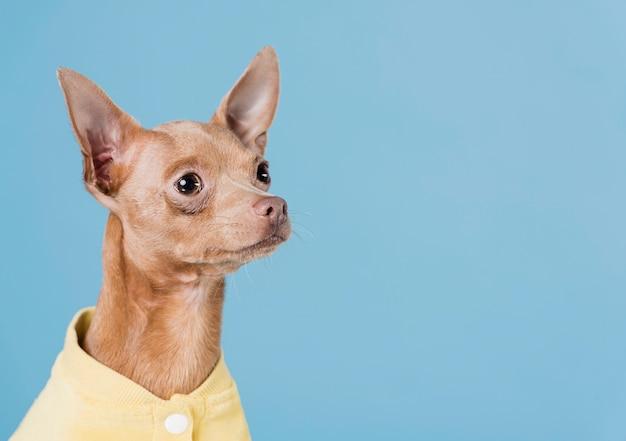 コピースペースでかわいい小型犬
