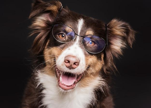 眼鏡のかわいい犬
