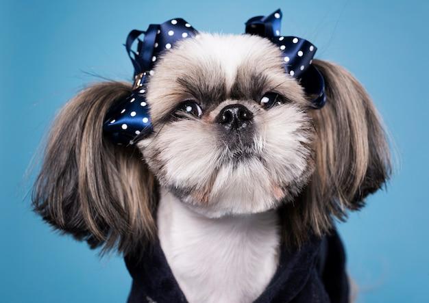 正面かわいい小さな犬
