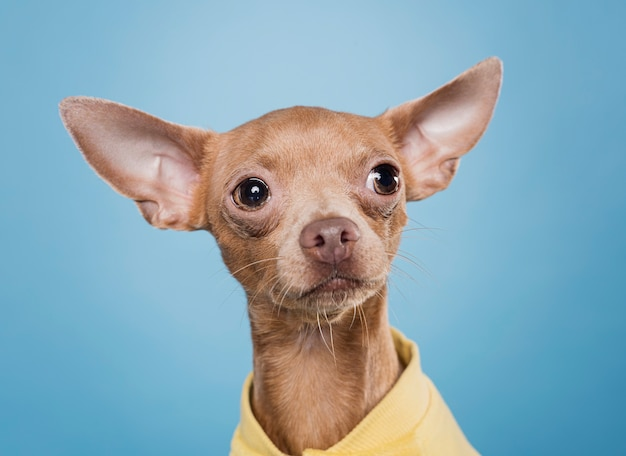Вид спереди милая маленькая собака
