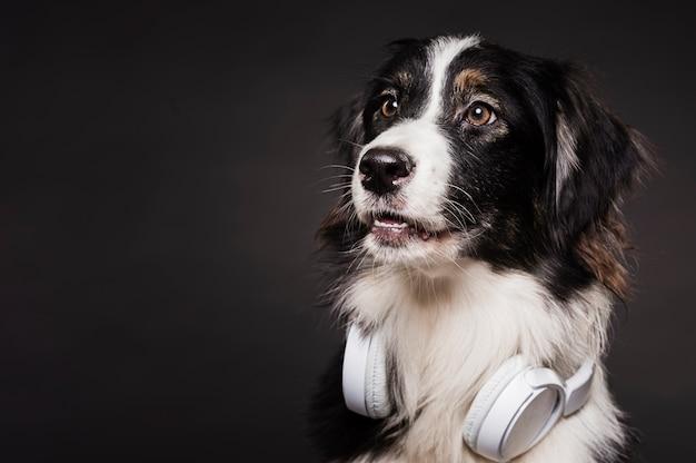 ヘッドフォンでかわいい犬