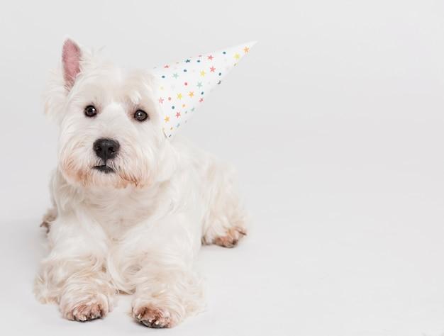帽子のかわいい小さな犬