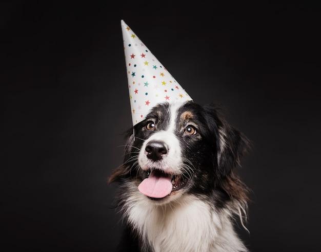 帽子をかぶったかわいい犬