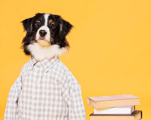 衣装を着たかわいい犬