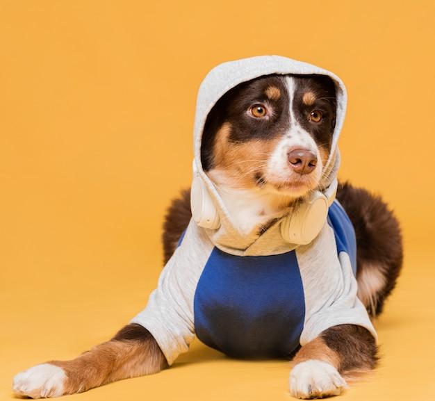Вид спереди милая собака сидит