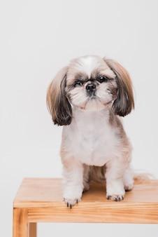 正面に座っているかわいい犬
