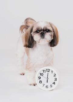 時計と正面のかわいい犬