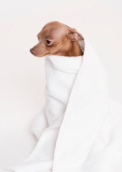 タオルに座っている正面かわいい犬