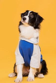 Вид спереди милая собака в костюме