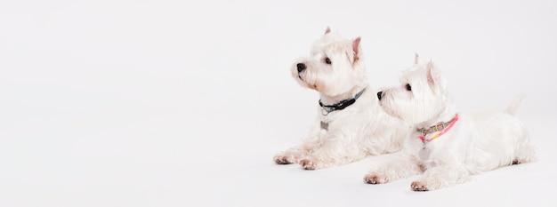 座っているかわいい小型犬