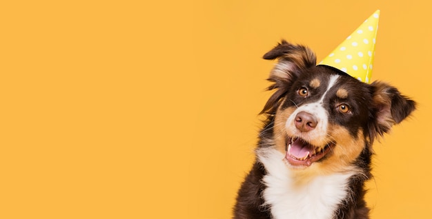 コピースペースで正面のかわいい犬