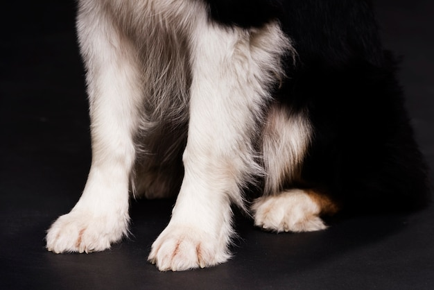 クローズアップ犬の前脚