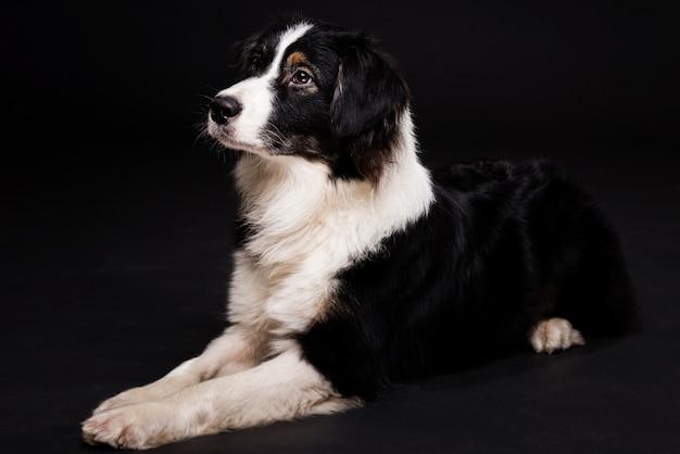 座っているかわいい犬