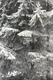 冷凍葉のクローズアップ枝