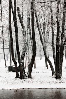 冬の凍った木と川