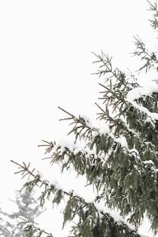 木の葉と日光の冬の空