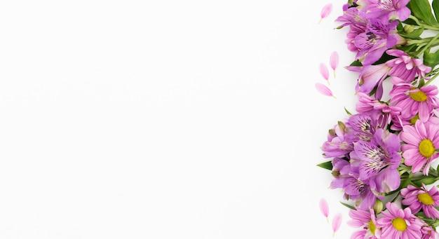 白い背景を持つビュー花のフレームの上
