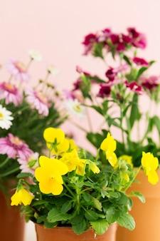 色とりどりの花で春のコンセプト