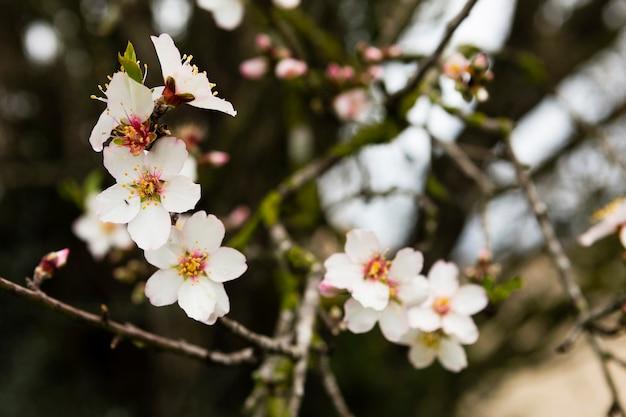 Красивый белый цветок на открытом воздухе